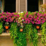 Los jardines en el balcón, la nueva moda en decoración y jardinería